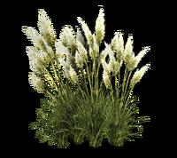 Pgrass