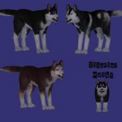 Some variations of the husky.