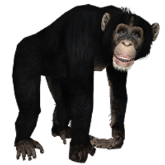 Chimpanzee remake.