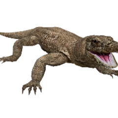 Komodo Dragon remake.