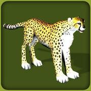 Cheetah2