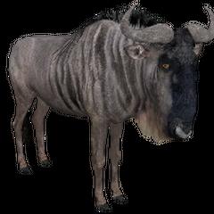 Wildebeest remake.