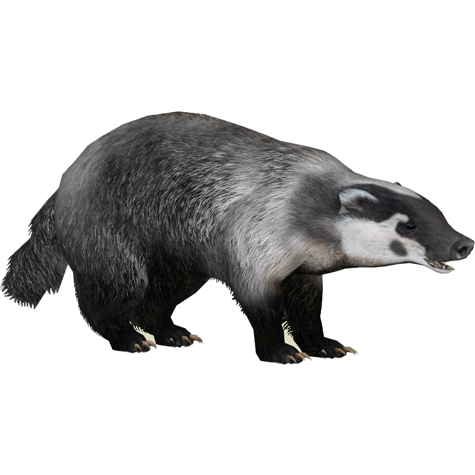 Who is the honey badger dating