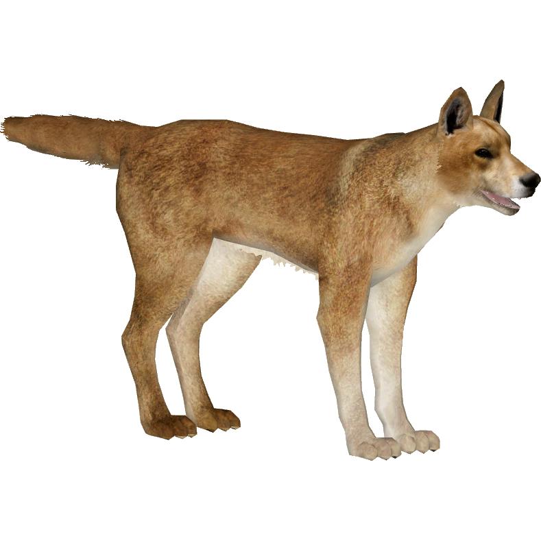 Dingo Zerosvalmont Zt2 Download Library Wiki Fandom