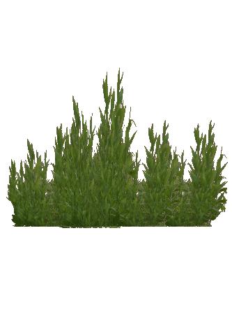 Image Seaweed Cat amp Juicypng ZT2 Download Library
