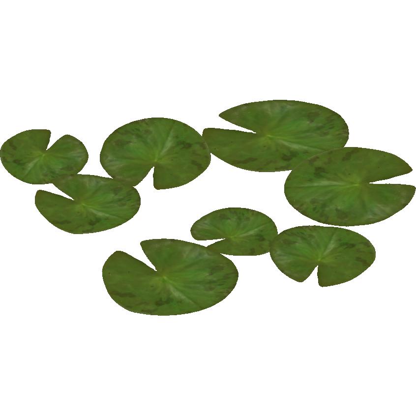 Image Water Lily Zeta Designs5png ZT2 Download