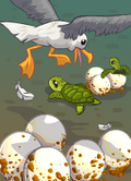Pesky Seagulls-icon