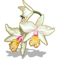 Orchids White-icon