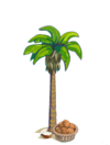 Coconut Tree Finished-icon