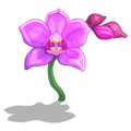 Orchids Pink-icon