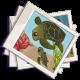 Turtle Family Photos-icon
