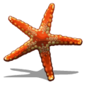 Starfish (collection) Orange Starfish-icon