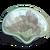 PaintedShells Eagle-icon