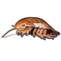 Deep Sea Creatures Giant Isopod-icon