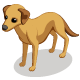 Brown Dog-icon