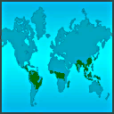 Rainforest Worldwide