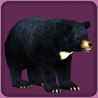 File:Asiatic Black Bear.jpg
