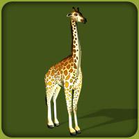 File:Reticulated Giraffe.jpg