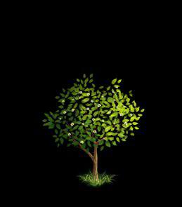 File:Oak Tree 4.png
